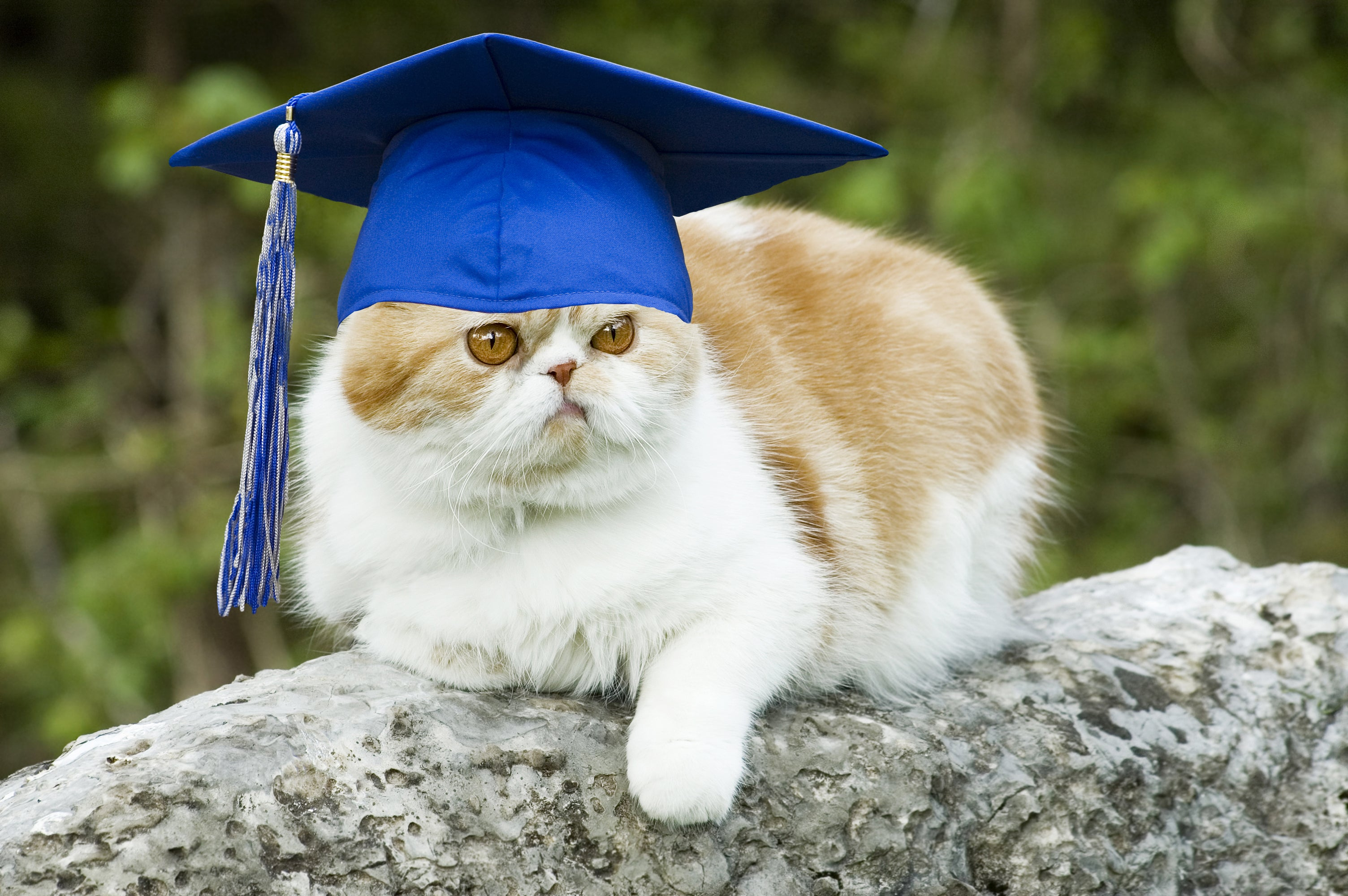 31 Animated GIFs For When You Graduate College