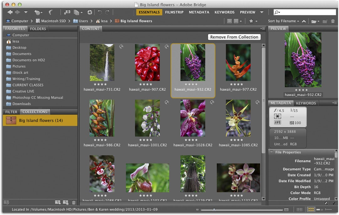 Review photoshop cc struts its actions filters and enlargements