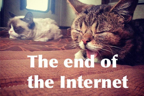 Lil Bub Meets Grumpy Cat The Internet Can End Now Pcworld