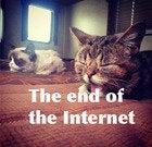 Lil Bub and Grumpy Cat