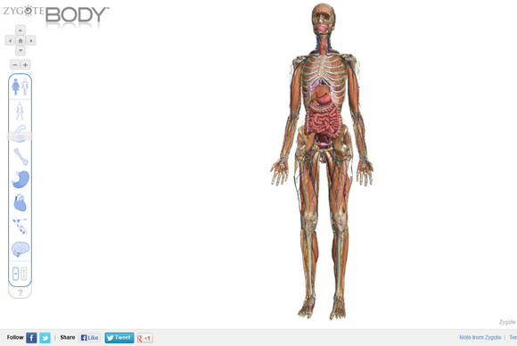 Review See Human Anatomy In 3d With Zygote Body Pcworld