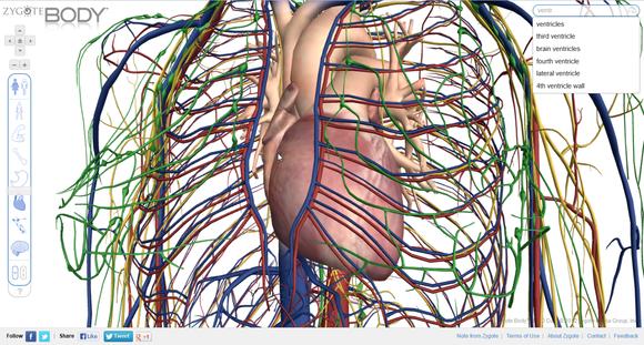 Zygote_Body_circulatory_system_screenshot
