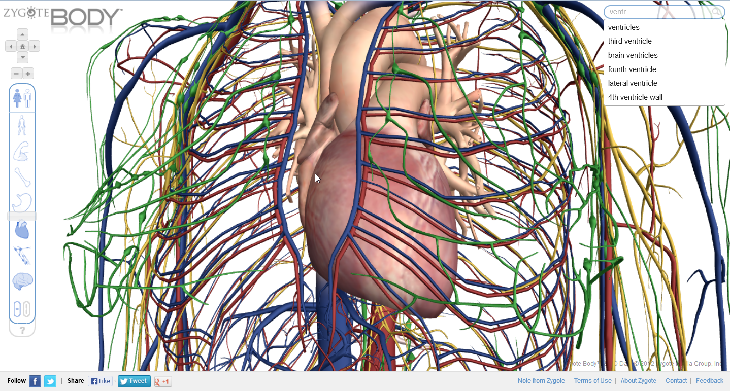 Review: See human anatomy in 3D with Zygote Body | PCWorld
