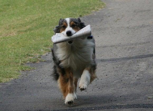 dog fetching news
