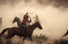 Ride 'em cowboy? Easy does it in IT