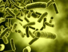 How bacteria could run the Internet of Things