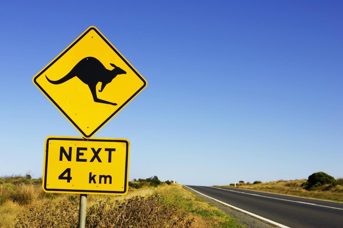 australia victoria great ocean road kangaroo road sign 200403738 001