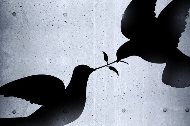 birds fighting on concrete wall 148149885