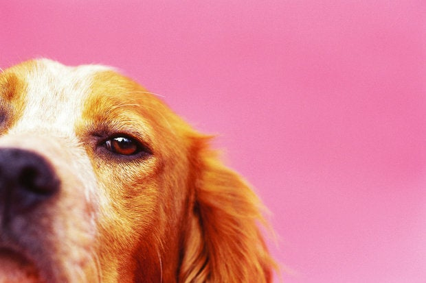 Internet of Things for lost pets monitoring pets health