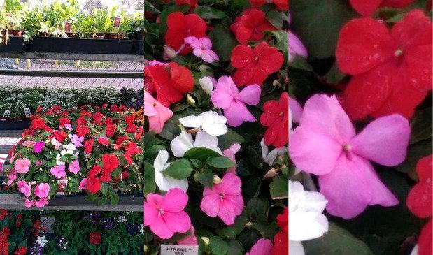 htcone flowers