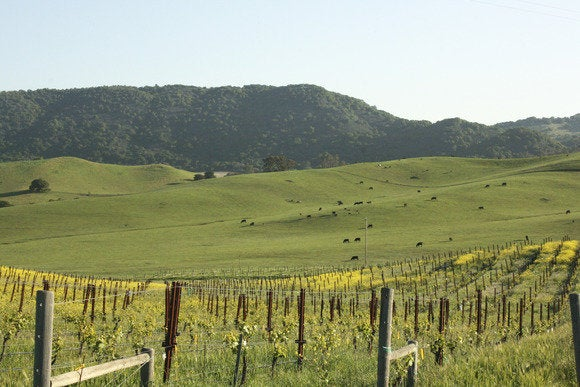 Sonoma County hillside