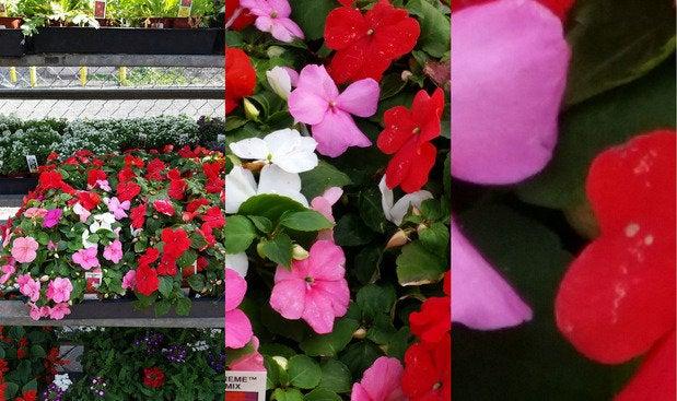 samsunggs5 flowers