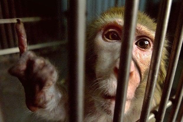 063014blog monkey