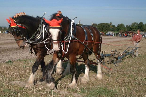 horses pulling plow