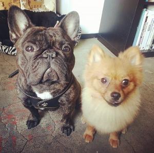 blanka and pom