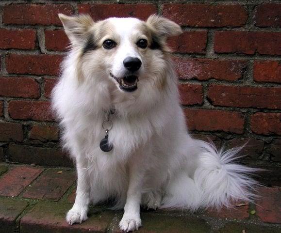 white cute dog