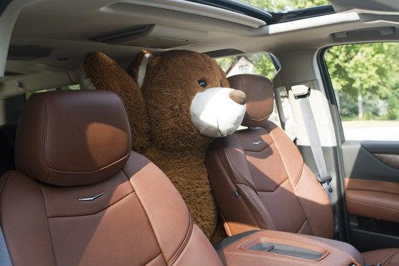 2015 cadillac escalade bear intruder 1