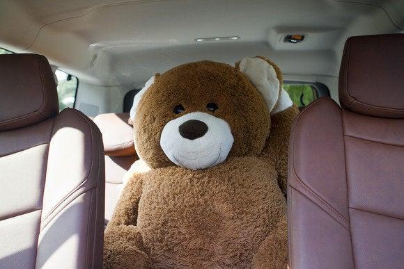 2015 cadillac escalade bear intruder 2
