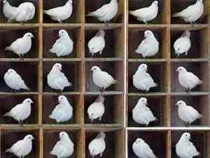 pigeon holeresized1