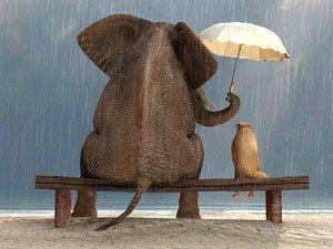 Elephant dog rain