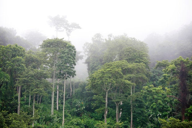 Protecting the rainforests with IoT and recycled phones