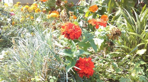 desire610flowers