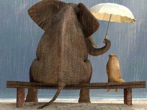An elephant holds an umbrella for a dog as they sit on a bench in the rain.