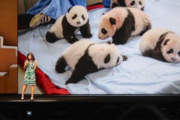 adobe max 2014 ami vitale pandas