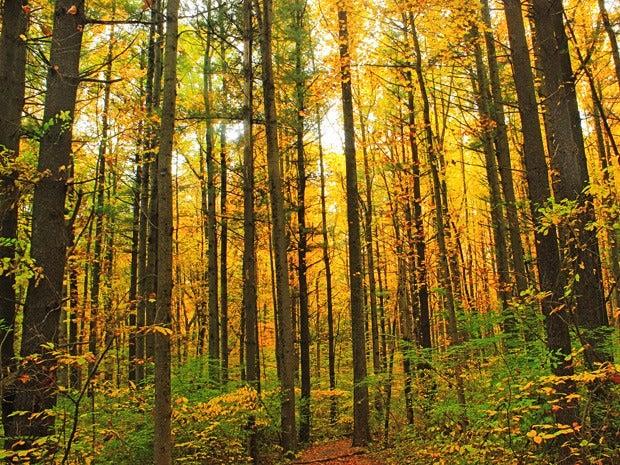 dense forest 100568090 orig jpg?auto=webp.