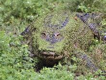Drain the swamp: an IT management model