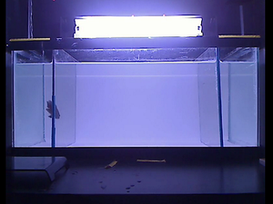 Mental health research tool: Robot aquarium fish of horror
