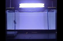Mental health research tool: Robot aquarium fish of horror