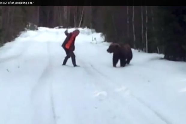 bearattacks