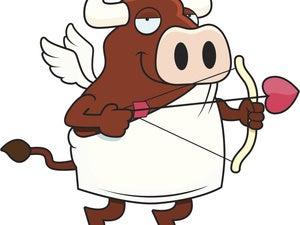 cow bull cupid thinkstock
