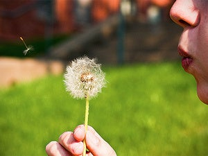 dandelion breath blow wind wish air