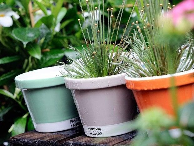 pantone flower pot