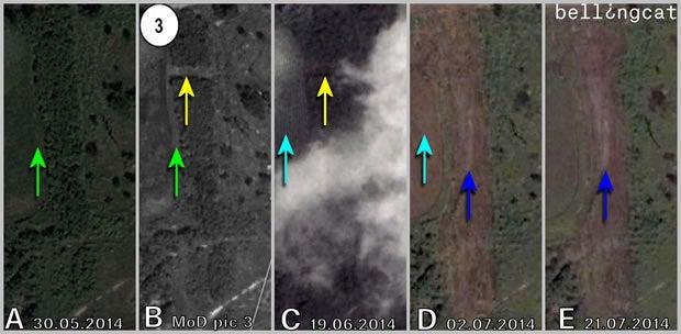 Comparing forest vegetation pic 3