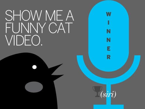 7 cat video