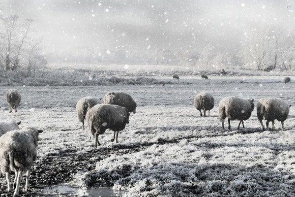 snowdaze