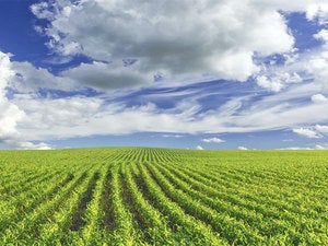 beautiful green farmland with blue sky and clouds