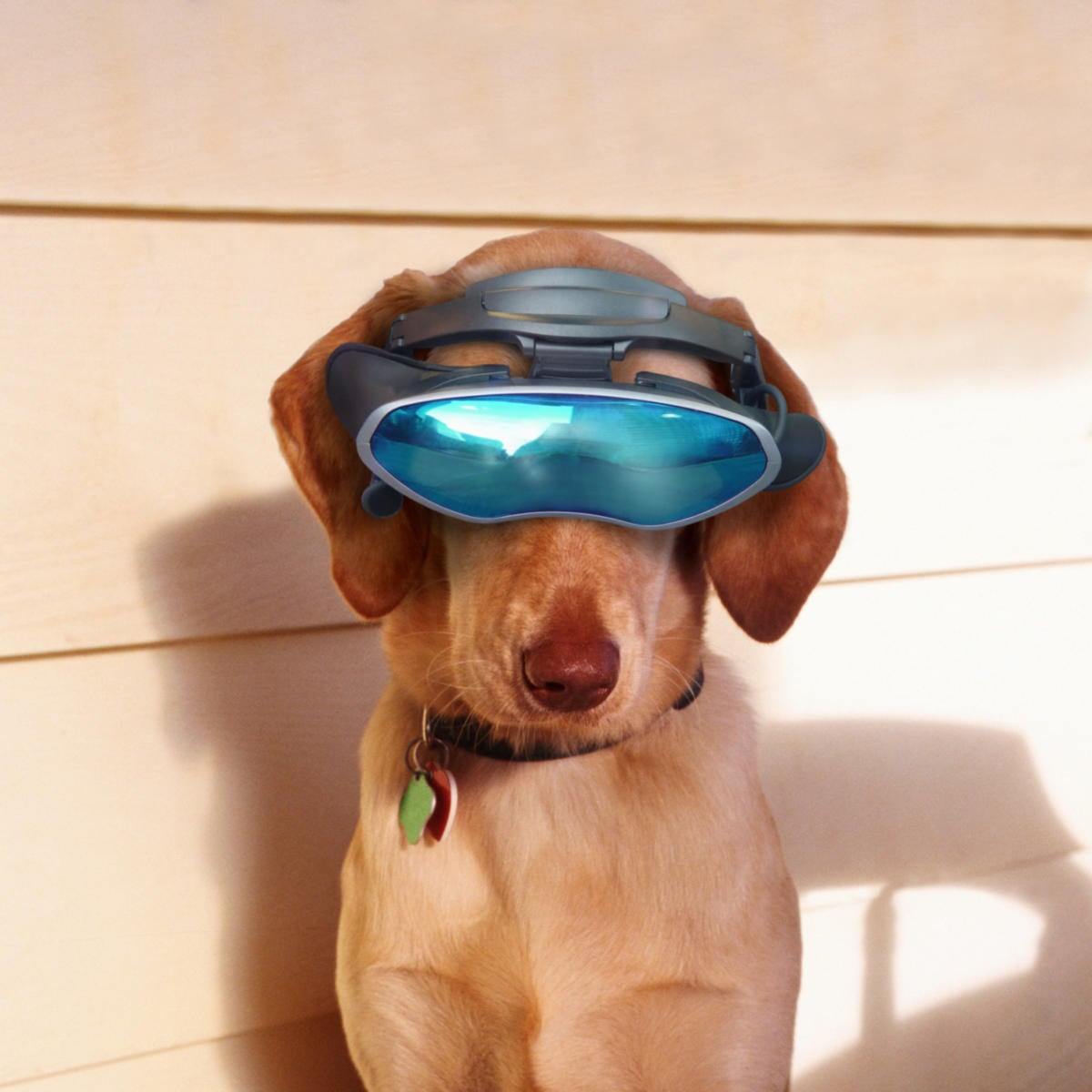 future dog with virtual reality glasses