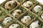 Too many desktop eggs in one cloud basket?