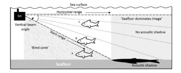 shark sonar