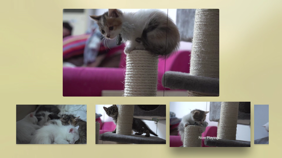 kittens tv