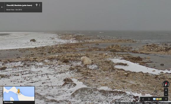 polar bear maps