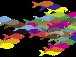 fish 388346 960 720 pixabay