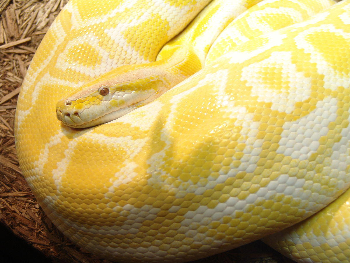 What is the Python programming language? Everything you need to know