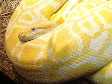 What is Python? Powerful, intuitive programming
