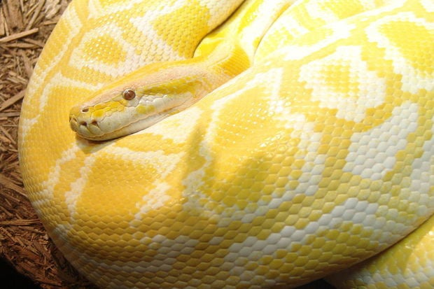'FAT' and fast: What's next for Python