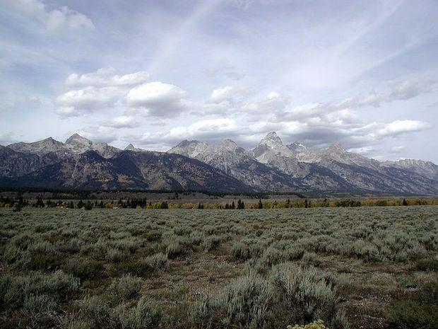 Moose Wyoming